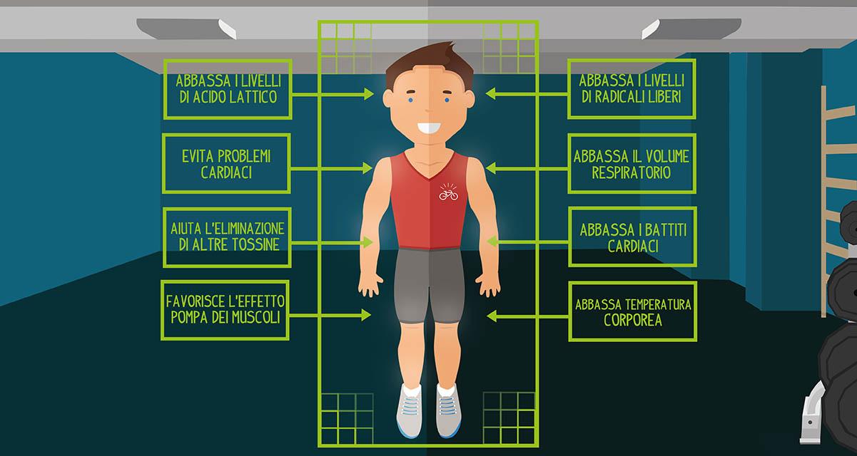 Immagine riassuntiva di quello che succede a livello fisiologico nel nostro corpo durante la fase di defaticamento